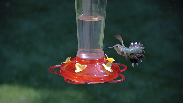 A hummingbird at a feeder.