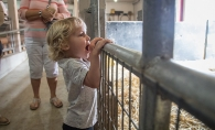A child watches an animal at Gale Woods Farm's Breakfast on the Farm event.