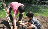 Rev. John Lee and his son Soren planted fresh produce in a family plot at St. Luke's.