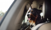 Pet dog on a road trip.