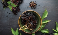 Elderberries for home remedies