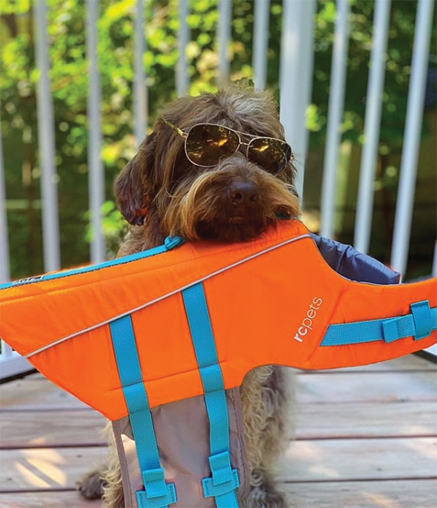 A dog wearing sunglasses holds a life jacket in its mouth.