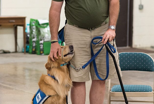 A Helping Paws service dog gets a pet from a man.