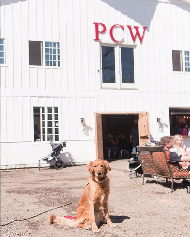 A dog sits outside of Painter Creek Winery and Cidery