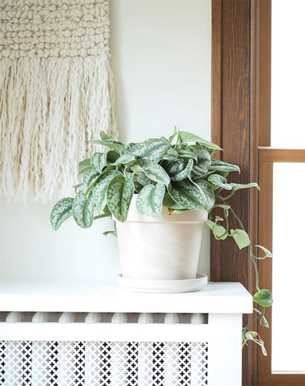 A plant from Tonkadale Greenhouse sits on top of a radiator near a window.
