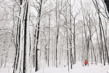 A woman and her dog walk through snowy woods near Lake Minnetonka