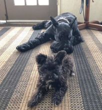 Natalie Webster's dogs Odin and Koa