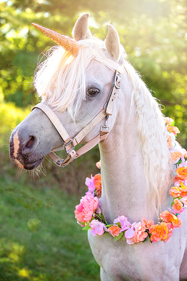 A horse dressed up in a lei and unicorn horn.