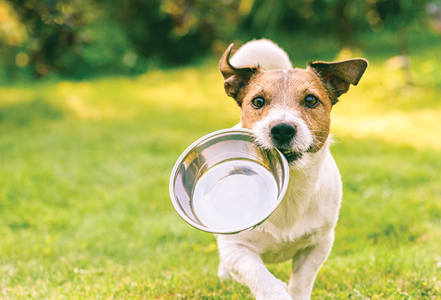 A dog runs with their food bowl.